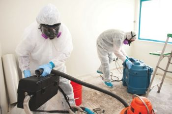 mold cleanup phoenix